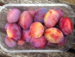 Punnet of Plums