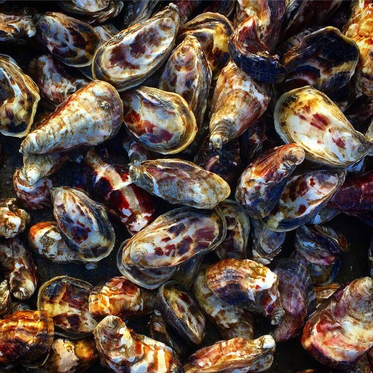 Rocks Oysters